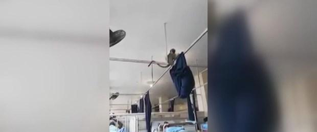 Yaşam alanları işgal edilen maymunlar hastaneyi bastı
