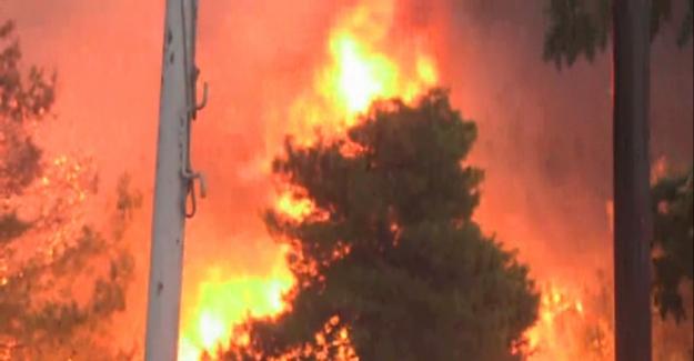 Yunanistan'da orman yangınında ölü sayısı 74'e yükseldi!