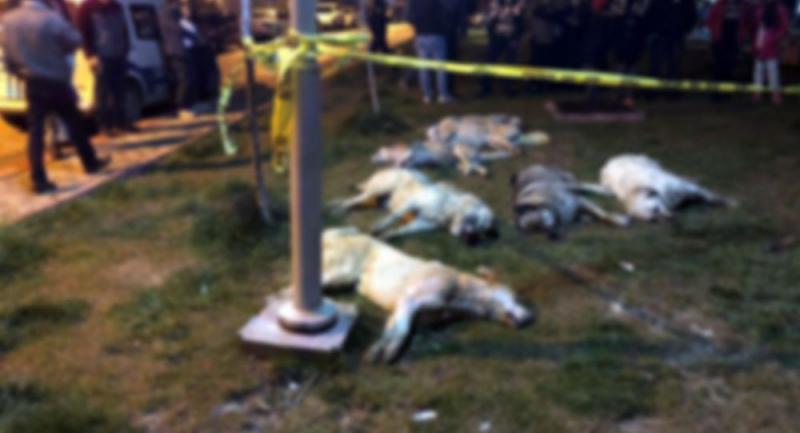 16 köpeğin toplu halde katledilmesinde katillerin serbest bırakılmasına itiraz
