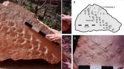 313 milyon yıllık fosil ayak izi bulundu