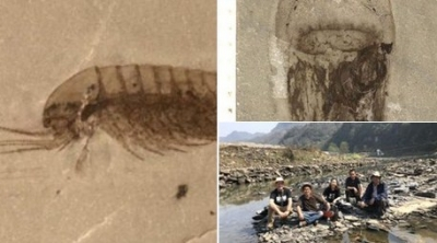 518 milyon yıllık binlerce fosil bulundu: 'Canlıların kökenine dair çok önemli bir kaynak'