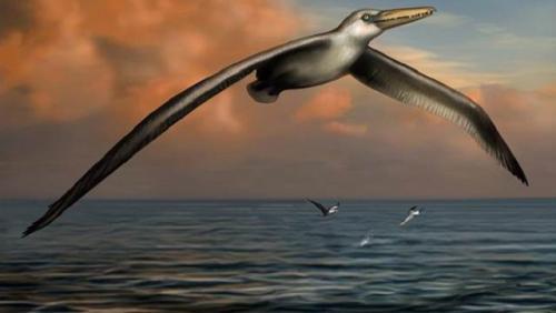 İşte dünyanın en büyük uçan kuşu!