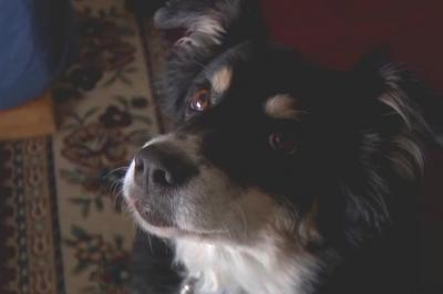 ABD'de bir iş adamı, köpeğine 5 milyon dolar miras bıraktı