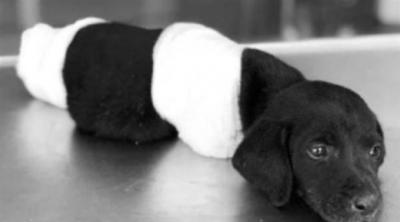 Adalet Bakanı Gül'den uzuvları kesilen yavru köpekle ilgili açıklama