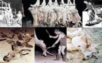 Adidas ve Nike milyonlarca kanguruyu katletmeye devam ediyor!