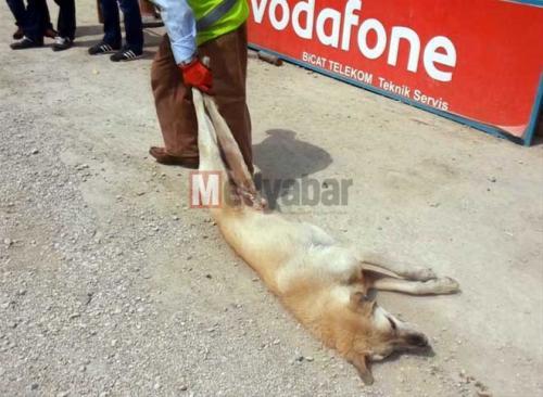 Akyazı Belediyesi'nden hayvanlara işkence!