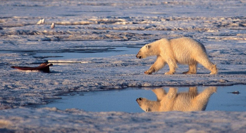 Alaska'da rekor sıcaklık