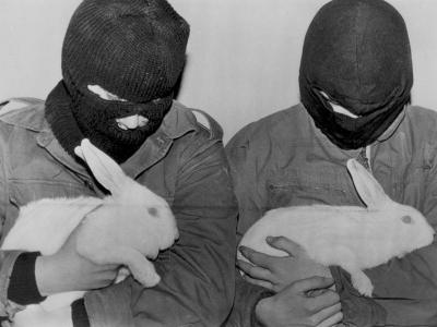 ALF, deneylerde işkence yapılan tavşanları kurtardı!
