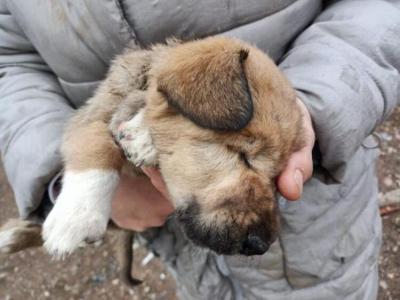 Ankara'da dağlık alana bırakılan 7 köpek hayatını kaybetti