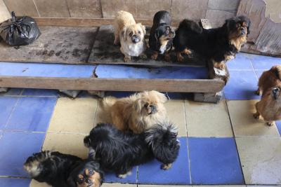 Ankara'da ev baskını: 20 köpek ve 16 kediye el konuldu