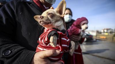 Ankara'da ses telleri kesilen köpekleri sahiplenmek için 15 bin kişi başvurdu