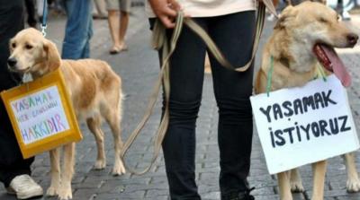 Antalya'da bir kedi bacakları kesilerek öldürüldü