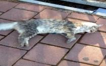 Antalya'da kedi katliamı devam ediyor!