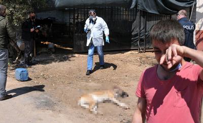 Antalya'da komşusu köpeklerini tüfekle vurarak öldürdü