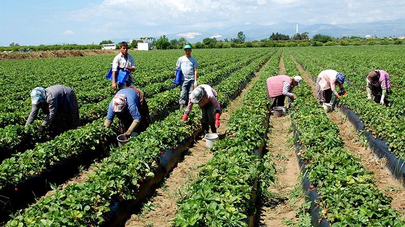 Antalya'da tarım ihracatı durduruldu iddiası