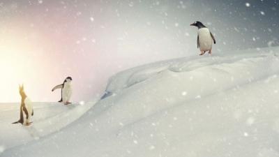 Antarktika'ya yağan karın miktarı artış gösteriyor