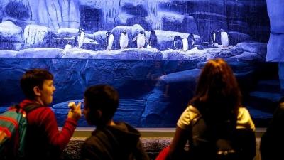 Aqua Florya ve İstanbul Akvaryum'a kutup pengueni tepkisi