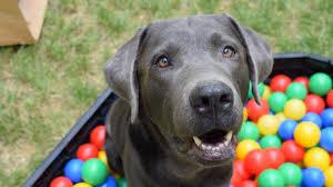 Araştırma: Köpekler ilk kez 16 bin yıl önce Almanya'da evcilleştirilmiş olabilir