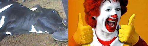 Hayvan cesedi satan McDonald's özür diledi!