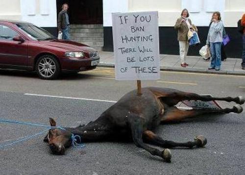 Ingiltere'de avcılar av yasağını at öldürerek protesto etti!