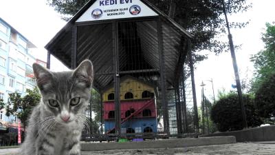 Avcılar Belediyesi, kedi evlerini kapatıyor