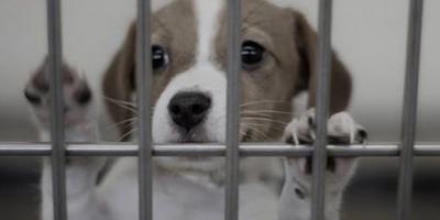 Berrak Turşu isimli şirket, Kütahya'daki barınakta sağ kalan köpekleri tedavi altına aldırdı