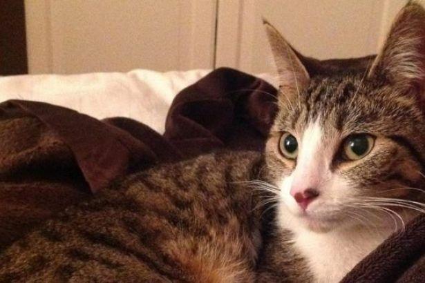 Beş yıldır kayıp olan kedi sahiplerine geri döndü