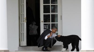 Beyaz Saray'da yaşayan köpek Bo, kanser nedeniyle hayatını kaybetti