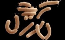 Beyin kimyasallarını yiyen bağırsak bakterisi saptandı!