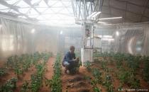 Bilim insanları: Mars toprağında yetişen ürünler sağlıklı!