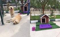 Bornova Uğur Anadolu Lisesi 2 köpeğin bakımını üstlendi