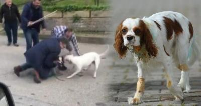 Bursa'da bakıcısının ağızlık takmadığı pitbull, bir köpeğin boğazını ısırdı