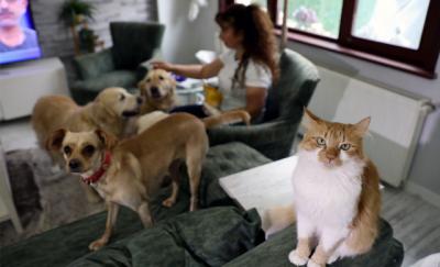 Bursa'da villasında 33 kedi ve 4 köpeğe bakıyor
