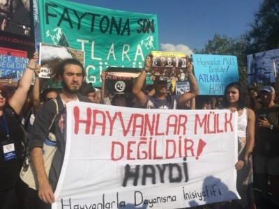Büyükada'da fayton işkencesi protesto edildi!