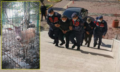 Çaldığı alageyiği öldürüp yiyen kişiye 61 bin lira ceza