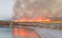 Çarpanak Adası'ndaki yangında çok sayıda martı yaşamını yitirdi!