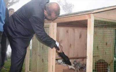 CHP defalarca teklif etti, AKP reddetti! Hayvanları koruma yasası, Erdoğan'ın seçim vaadi oldu