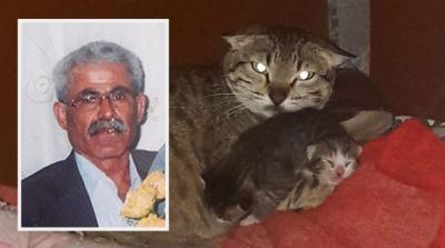 Davalık olduğu gelinine kızıp yavru kediyi parçaladı, serbest bırakıldı