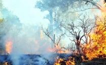 DBP: Lice yanıyor, müdahale edilmiyor!