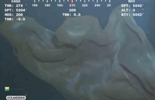 Tanımlanamayan deniz canlıları görüntülendi!