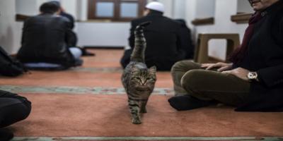 Diyanet: Barınaktan bir kedi sahiplenerek bakımını üstleneceğiz