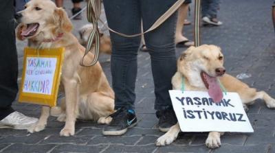 Diyarbakır'da yavru köpek yakılarak öldürüldü