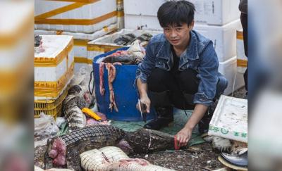 DSÖ: Canlı hayvan pazarları acilen kapatılmalı