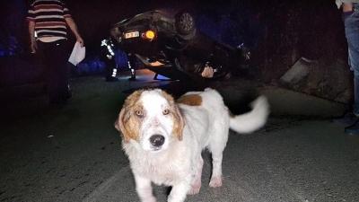 Düzce'de duyarlı sürücü köpeğe çarpmamak için elektrik direğine çarptı