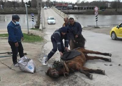Edirne'de aşırı yükten yere yığılan atı kuyruğundan tutup sürüklediler!