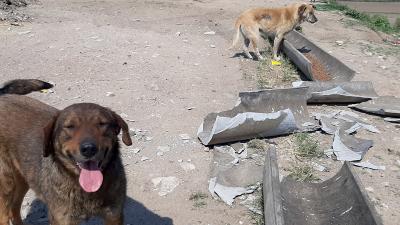 Edirne'de sokak hayvanları için yapılan mama kapları kırıldı!