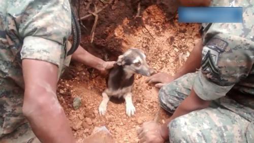 Toprak altında kalan köpek 18 saat sonra kurtarılabildi!