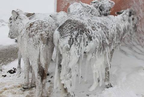 Eşekler buz tuttu!