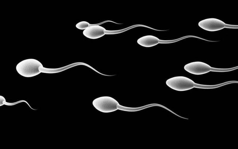 Eşinin ölmeden önce dondurulan spermlerini kullanmasına izin verilmedi