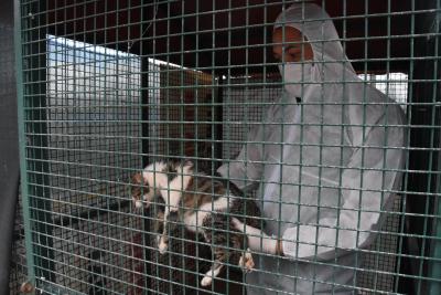 Eskişehir'de ölümcül kedi koronavirüsü görüldü: İnsana bulaşmıyor